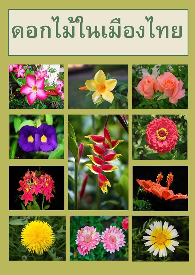 ดอกไม้ในเมืองไทย